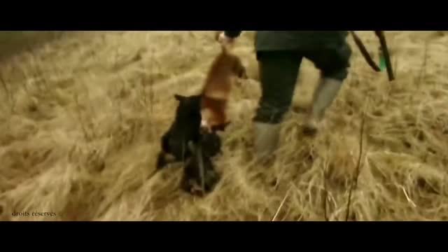 Stoppt die Fuchsjagd