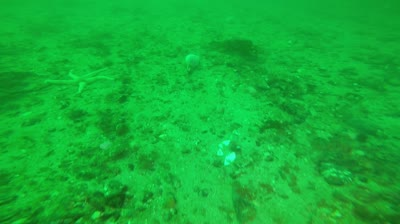 Loch Carron – May 2017 – Dive site D07