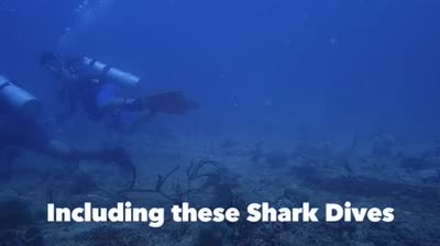 29th April 3rd May 2017 Trip Shark Diving Indonesia Morotai