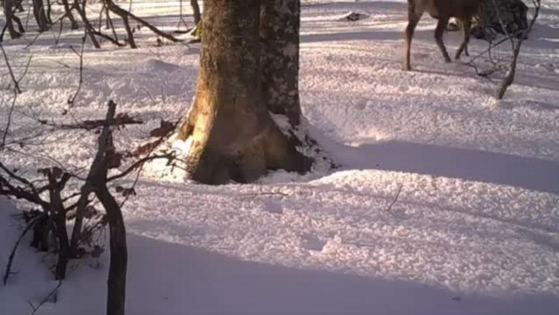 Mann filmt während eines Jahres eine Buche im Wald