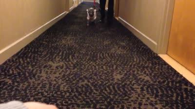 suji-carpet-walk