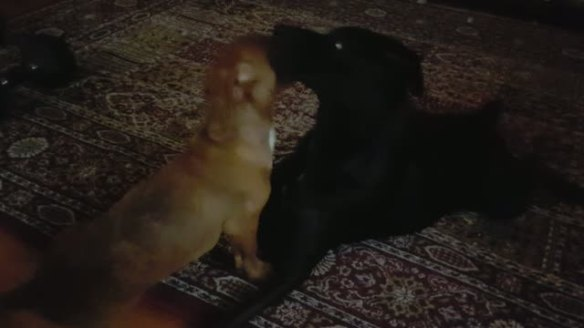 olly-and-stella-playing