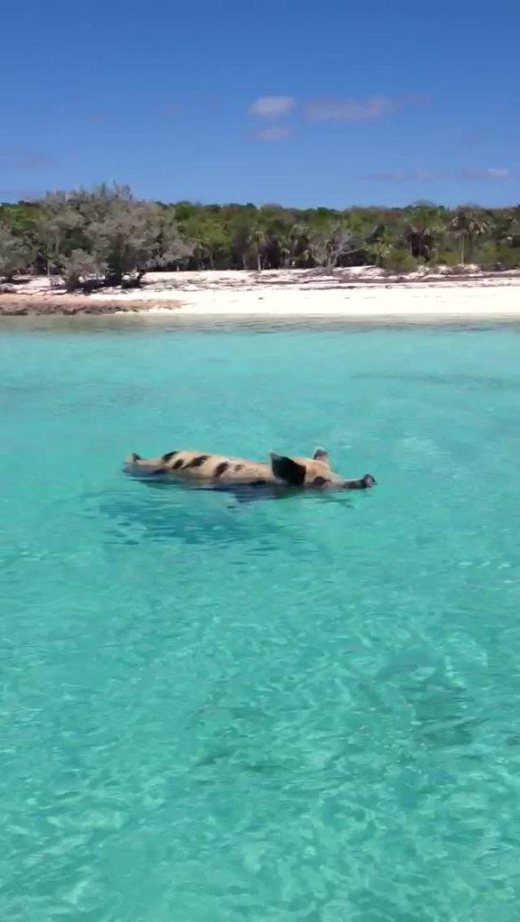 Big Major's Spot & Staniel Cay, Monday, Mar 4th   Dolphin Tales