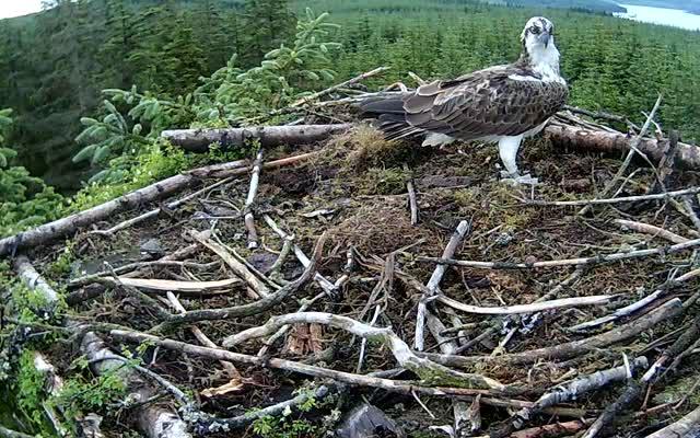 1 August- Blue BV lands on Nest 1