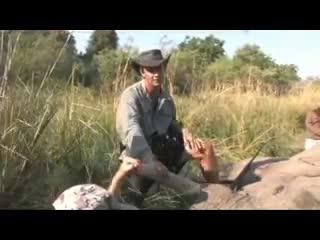 Trophäenjagd auf Elefant