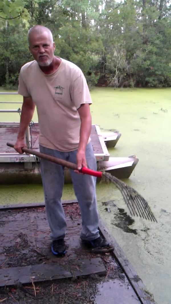 Harvesting Duckweed With A Pitchfork