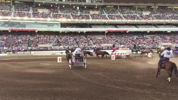 Calgary Stampede Alberta Canada Day 4 The Travelin