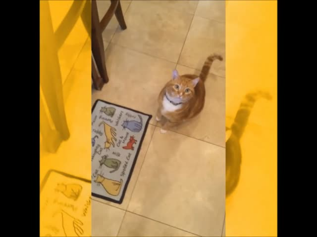 Foraging Felines Conscious Companion