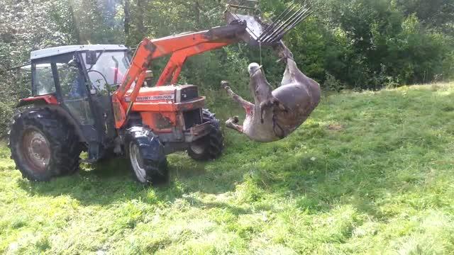 Schweizer Jäger erschiesst 4 Esel