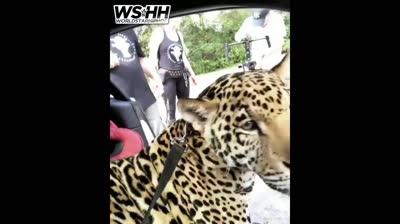 Rapper 'Jin Gates' Chillin In A Jaguar With An Actual Jaguar As His Passenger!