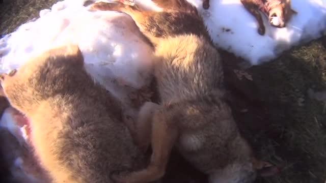USA: Jagdwettbewerbe