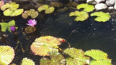 My koi blog a place for all koi lovers for Koi pond kh level