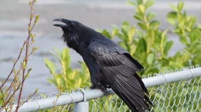 Complicated Raven Speech Apr 14 2018