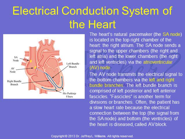 Pacemaker Patient Education The Basics Of Heart Anatomy And